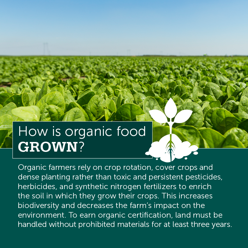 The Buzz on Organic Farming